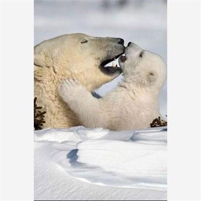 Kuzey Kutbunda hala bir parseliniz yok mu?